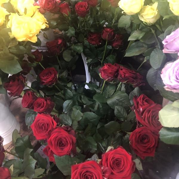rose rouge 10 pc verdure gpys
