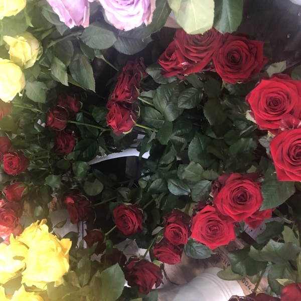 10roses rouge