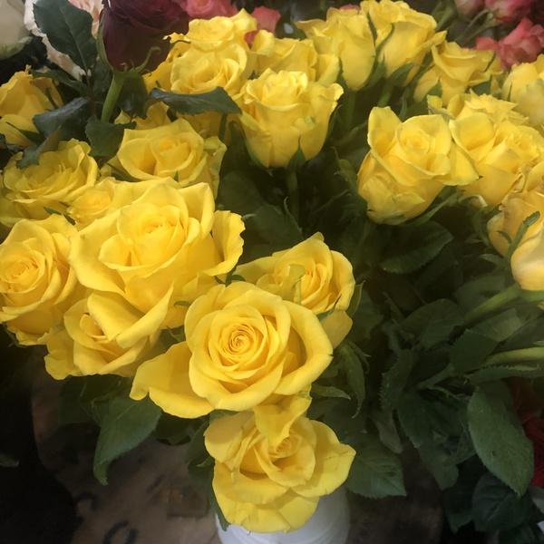 rose jaune 10 pc verdure gyps
