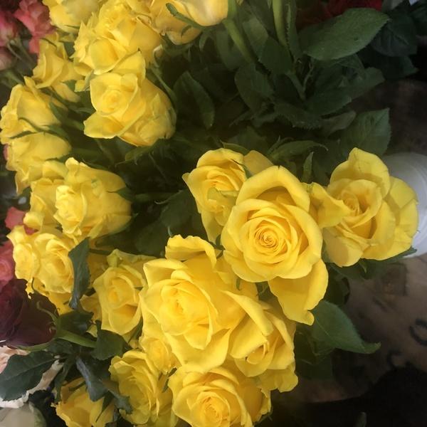rose jaune  10 pc