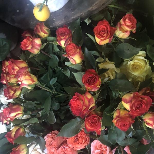 rose bicolor 10 pc