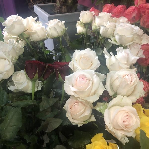 rose blanche 10 pc verdure gyps