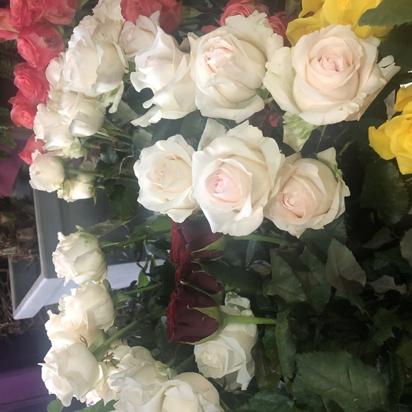 rose blanche 10 pc