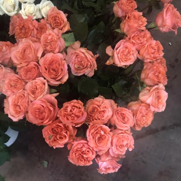 rose rose 10 pc verdure gyps