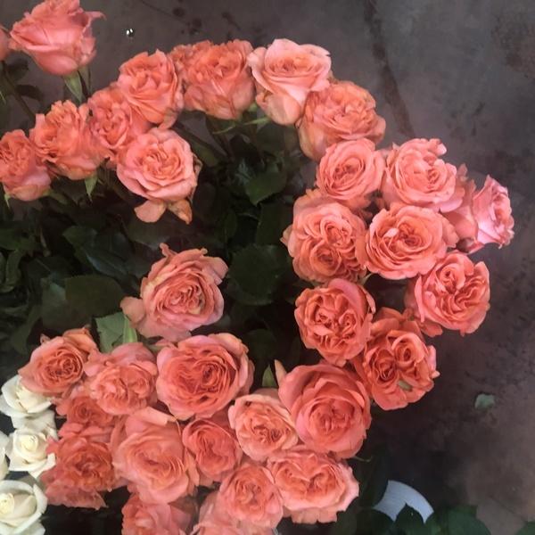 rose rose  10 pc